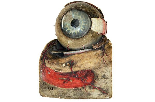 Preparació anatòmica de l'ull