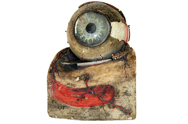 Anatomical eye preparation
